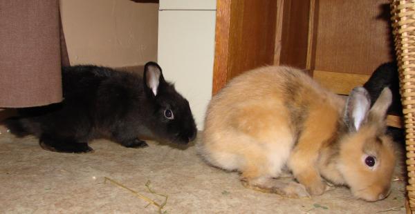 Chipie et Praline, lapines de 3 mois Img_1213