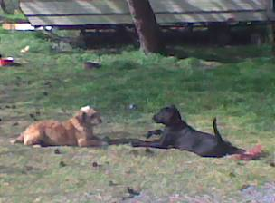 Mes 3 chiens  Photo010