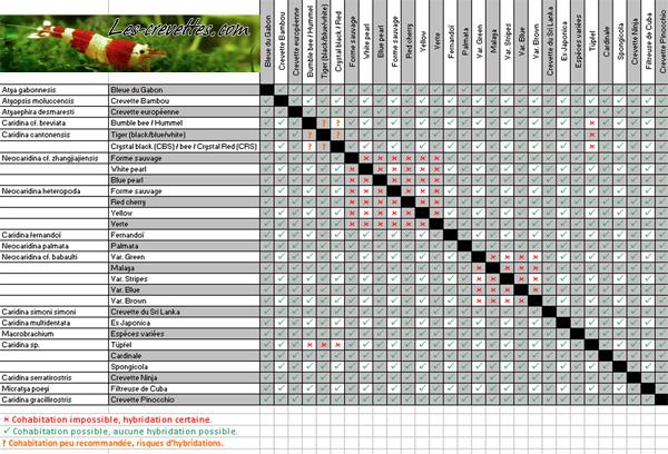 tableau d'hybridation des crevettes Hybrid10