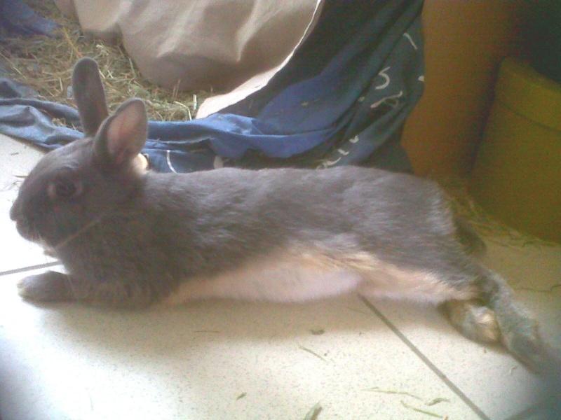 Gloupie, née en novembre 2010 Allong11