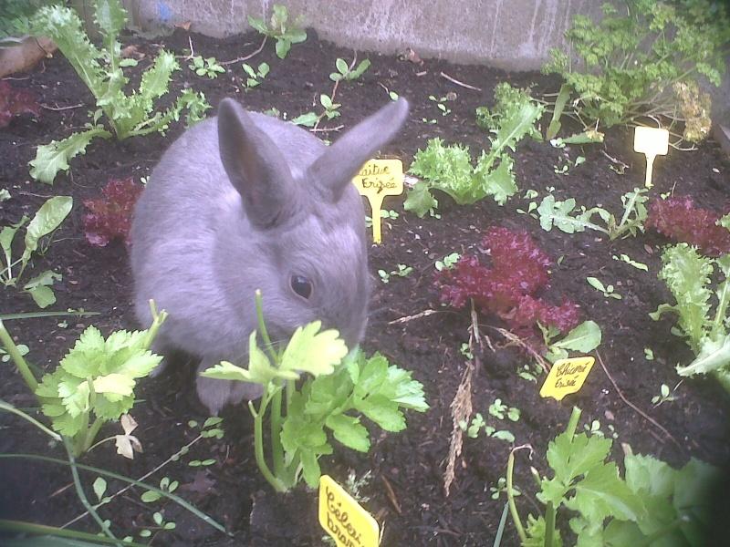 Flappie, née en novembre 2010 Au_pot10