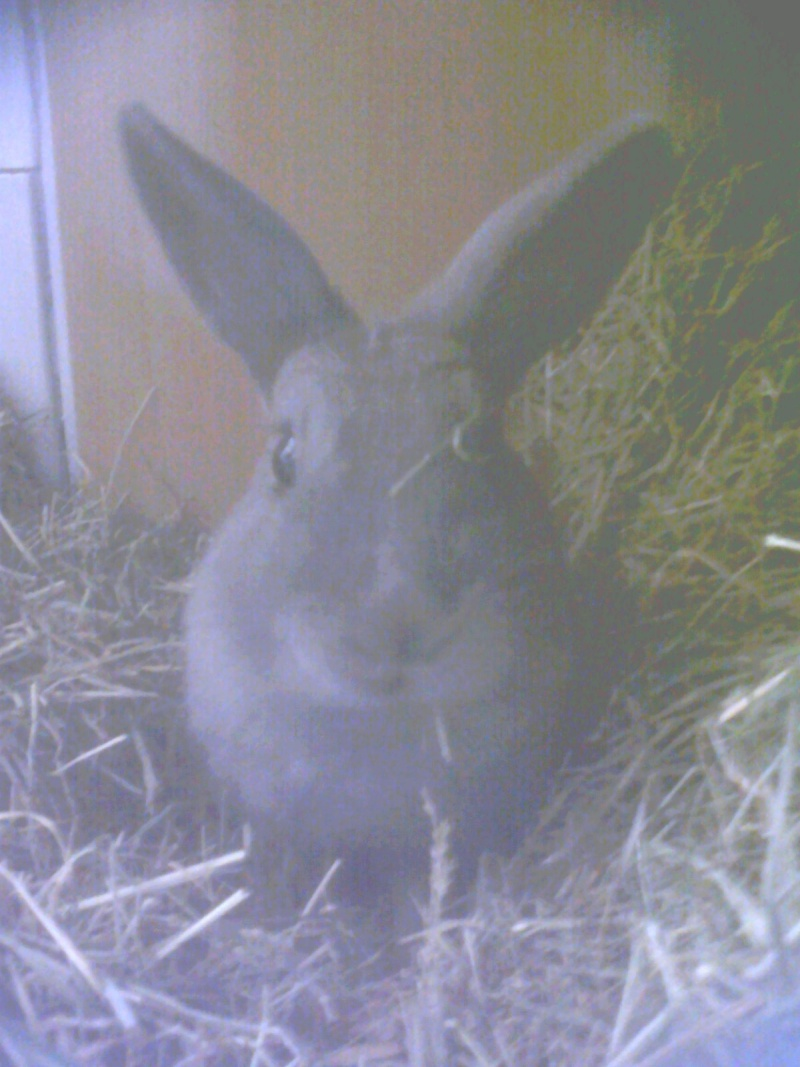 Flappie, née en novembre 2010 C_est_10