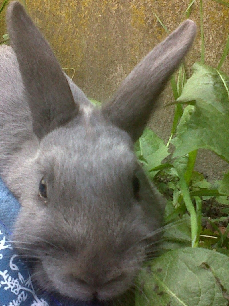 Flappie, née en novembre 2010 Flappi11