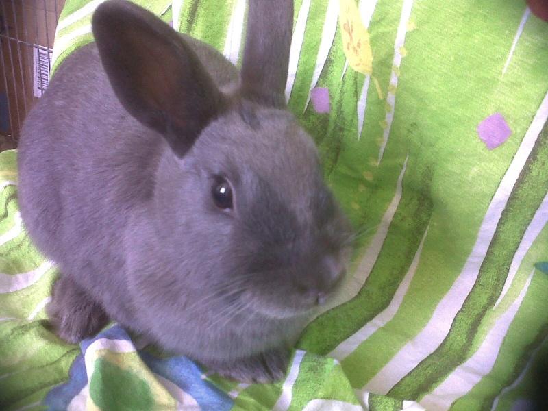 Flappie, née en novembre 2010 Flappi12