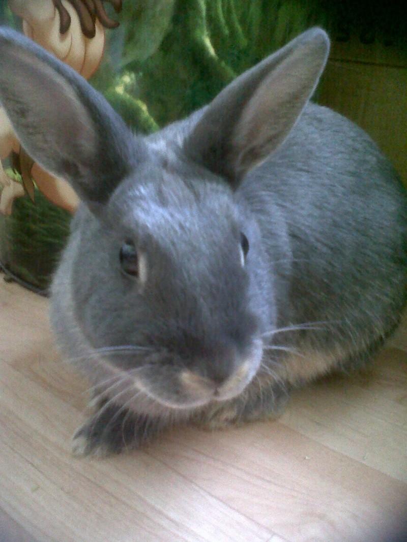 Gloupie, née en novembre 2010 Gloupi11