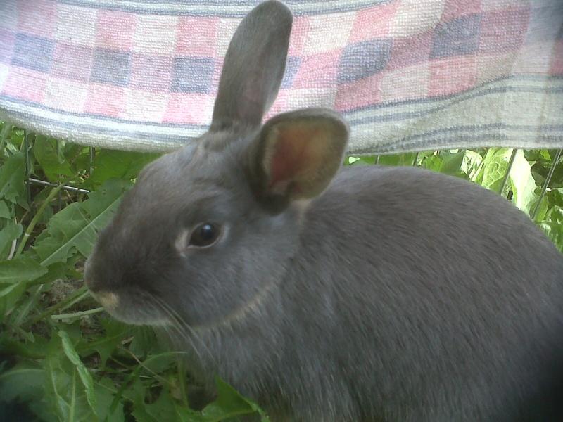Gloupie, née en novembre 2010 Gloupi12