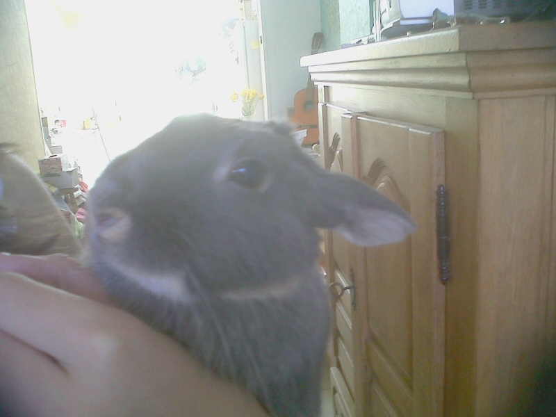 Gloupie, née en novembre 2010 Gloupi18