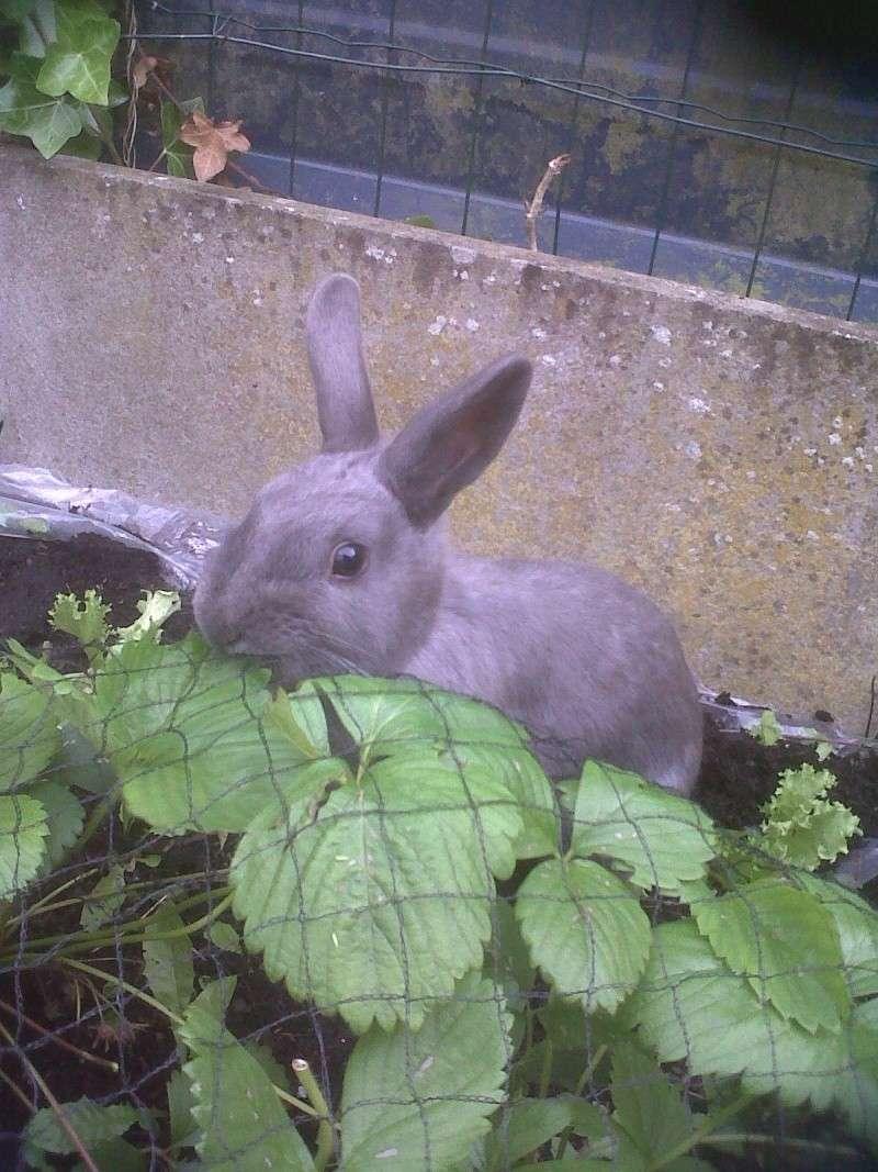 Flappie, née en novembre 2010 Ne_man10