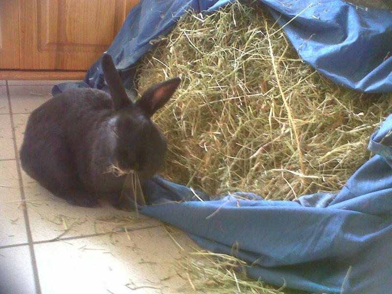 Olive, lapine noire, jeune - Page 5 Olive_11