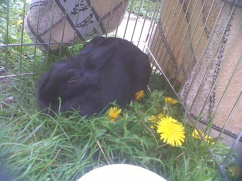 Olive, lapine noire, jeune - Page 5 Olive_12