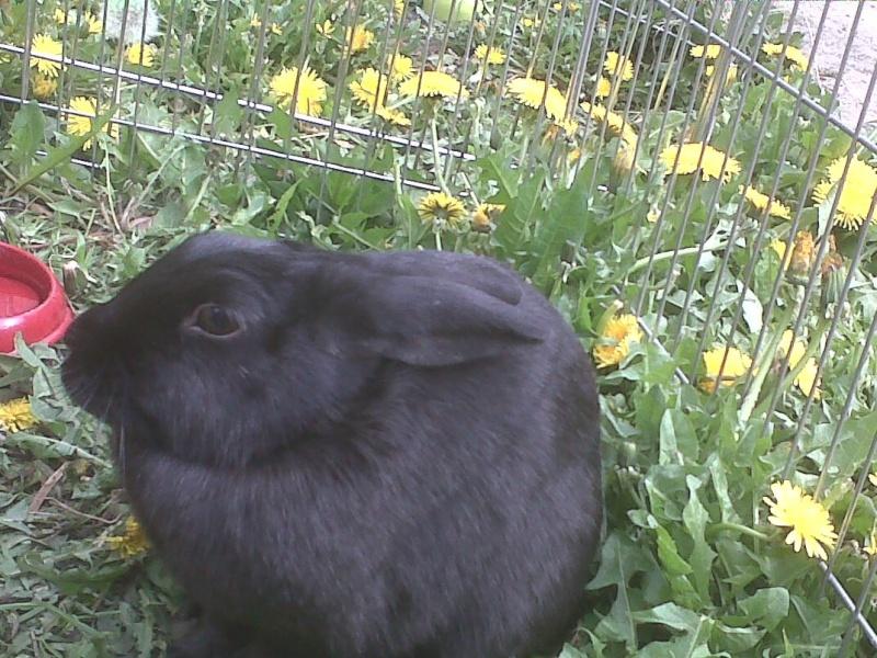 Olive, lapine noire, jeune - Page 5 Oreill10