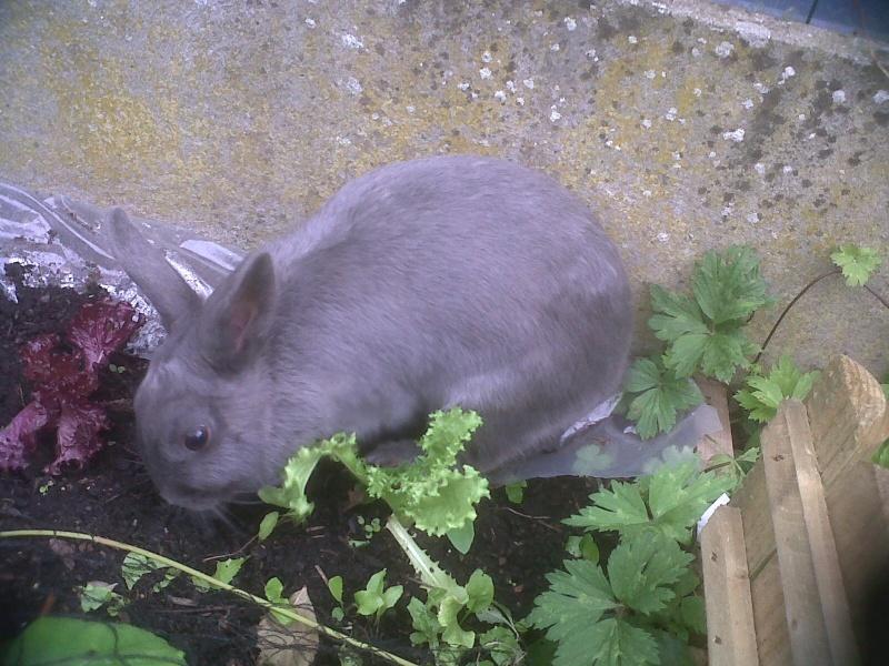 Flappie, née en novembre 2010 Plante10