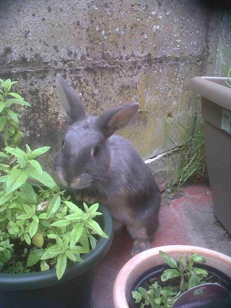 Gloupie, née en novembre 2010 Vervei10