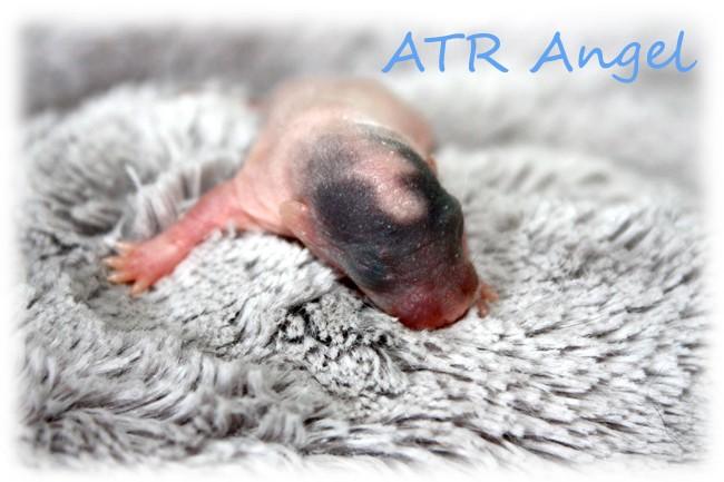 NEWS - 1mai 2011 ~ ATR Célia xXx IND Sacha - Page 4 Atr_an10