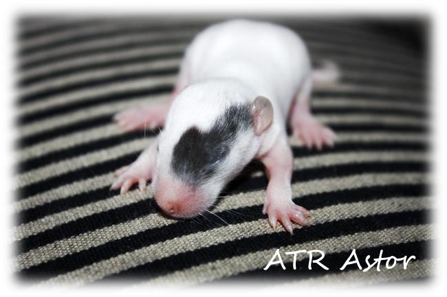 NEWS - 1mai 2011 ~ ATR Célia xXx IND Sacha - Page 5 Atr_as14