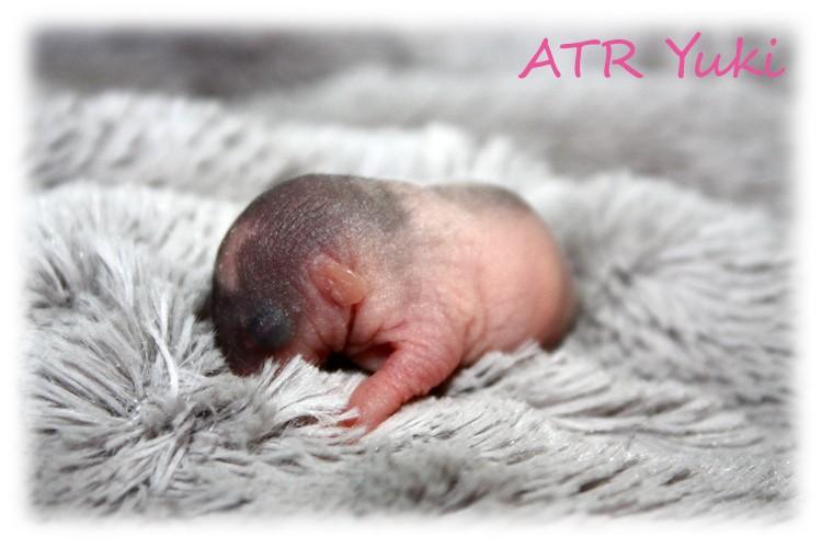 NEWS - 1mai 2011 ~ ATR Célia xXx IND Sacha - Page 4 Atr_yu10