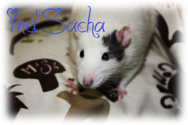 NEWS - 1mai 2011 ~ ATR Célia xXx IND Sacha Ind_sa11