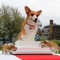 Un Corgi géant pour le mariage du Prince William et Kate Middleton Willia10