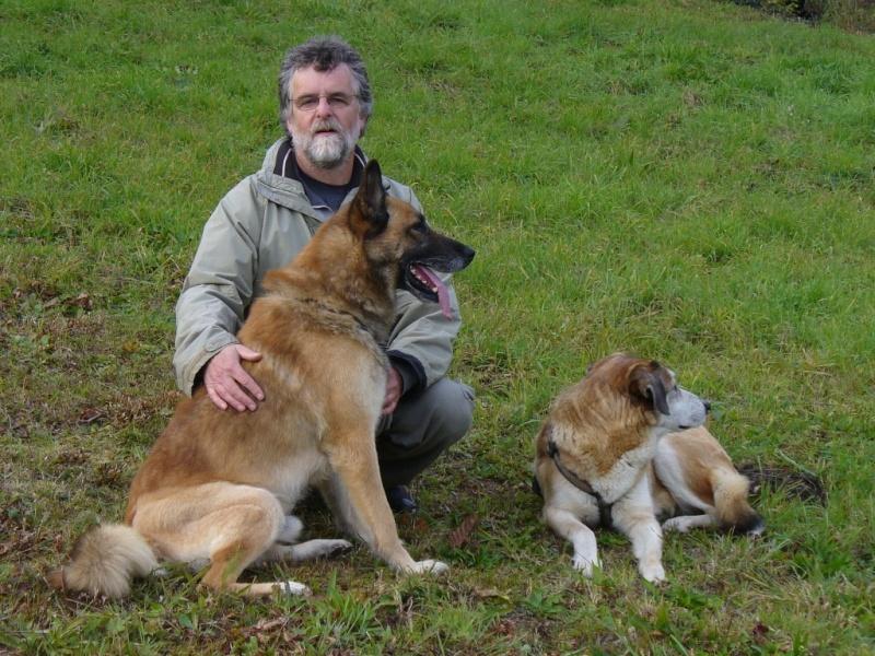 Scott, malinois x berger allemand volé/perdu à KRUTH (68) P1070612