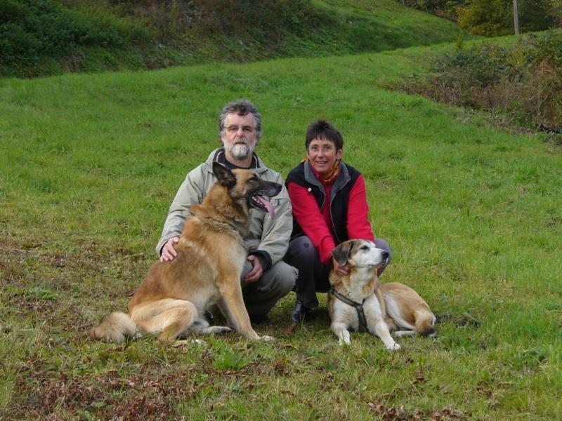 Scott, malinois x berger allemand volé/perdu à KRUTH (68) P1070613