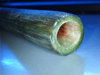 Amaryllis (hippeastrum) -culture, entretien, floraison Amaryl21