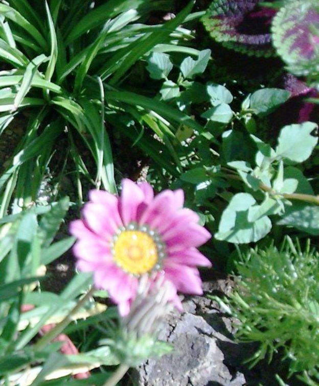 Floraisons du mois d'avril - Page 2 Copie_10