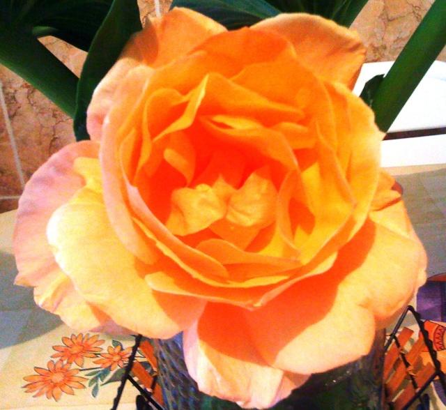 Floraisons du mois d'avril - Page 2 Img_3513