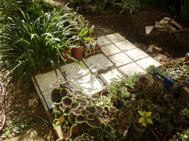 travaux au jardin - Page 2 P1020310