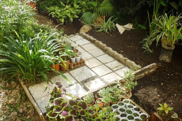 travaux au jardin - Page 2 P1020320