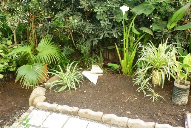 travaux au jardin - Page 2 P1020321
