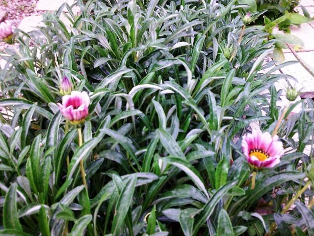 Floraisons du mois d'avril - Page 2 Photo012