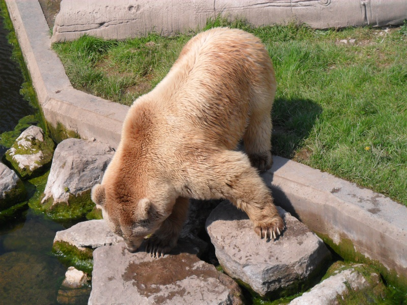 Les ours, panda, etc.. Sam_0210
