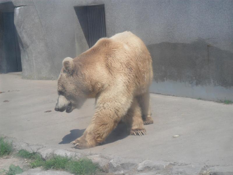 Les ours, panda, etc.. Sam_0312