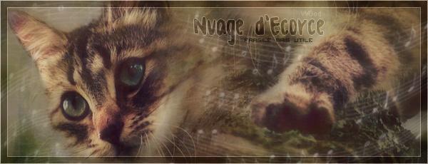 Petit Sapin >> Nuage d'Ecorce  [Essai 1] [Réussi] Nuage_13