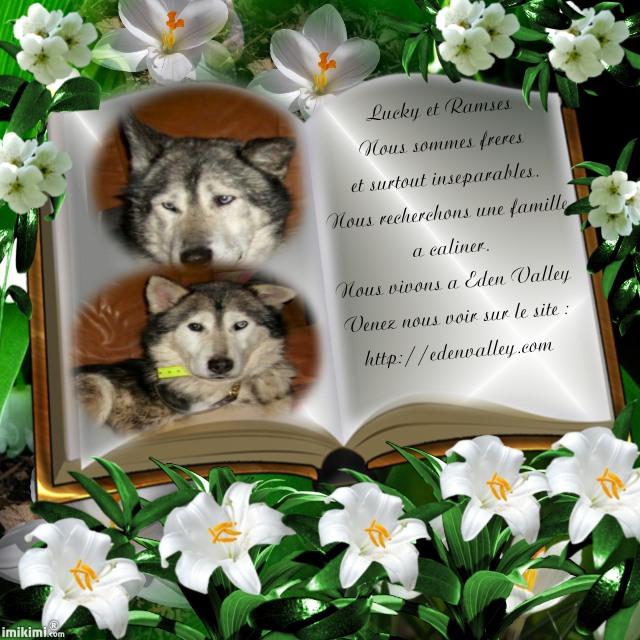 Les doudous à la recherche d'un  parrain / d'une marraine - Page 2 Lucky110