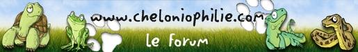 Reptiliomorpha Chelin11