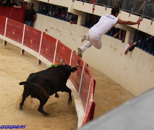 Finale des Vaches Cocardières  Grau du Roi  18-09-2010 Finale12
