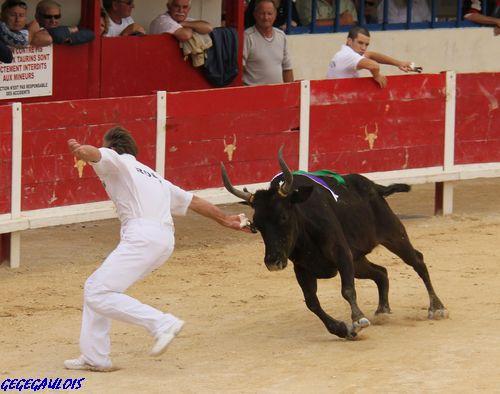 Finale des Vaches Cocardières  Grau du Roi  18-09-2010 Finale13