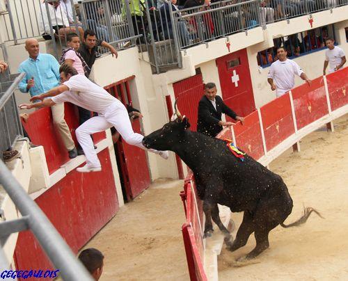 Finale des Vaches Cocardières  Grau du Roi  18-09-2010 Finale14