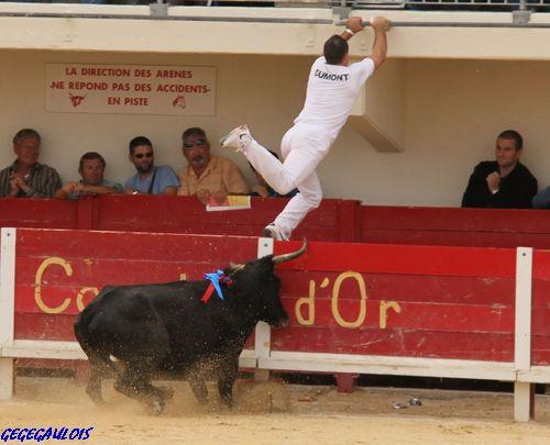 Finale des Vaches Cocardières  Grau du Roi  18-09-2010 Finale17