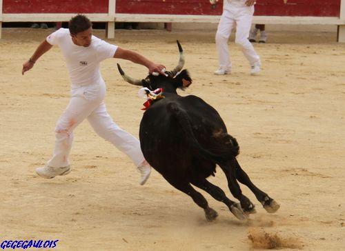 Finale des Vaches Cocardières  Grau du Roi  18-09-2010 Finale18