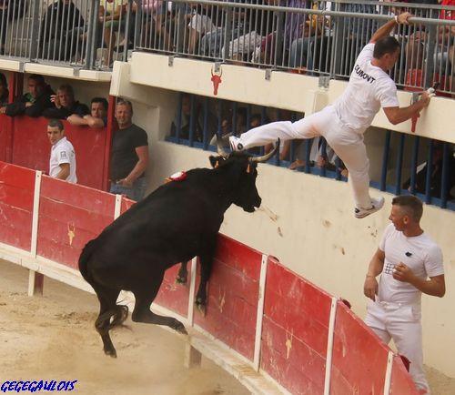 Finale des Vaches Cocardières  Grau du Roi  18-09-2010 Finale19