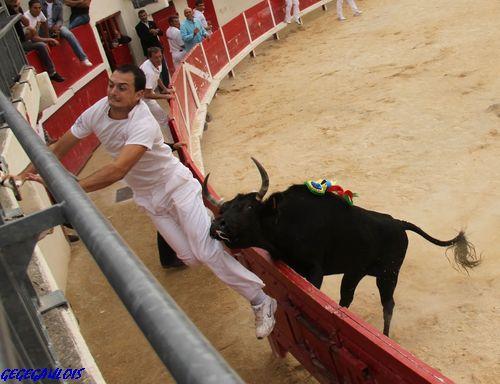 Finale des Vaches Cocardières  Grau du Roi  18-09-2010 Finale20