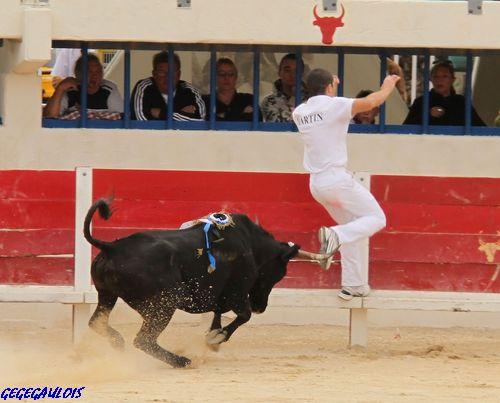 Finale des Vaches Cocardières  Grau du Roi  18-09-2010 Finale21