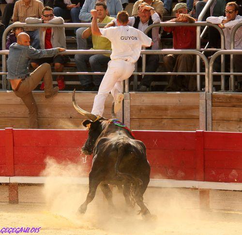 Finale du Trophée des Raseteurs    Vendargues   02-10-2010 Finale29