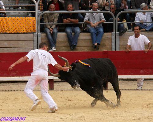 Finale du Trophée des Raseteurs    Vendargues   02-10-2010 Finale33