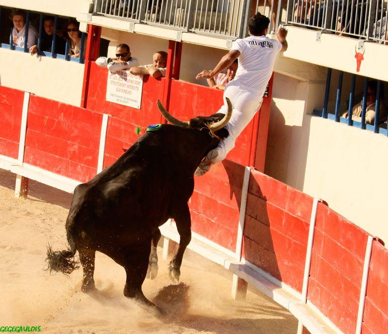 Grau du Roi - AS - 15-05-2011  Concours de Manades Grau-d23