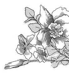 Brushs fleurs 41824216