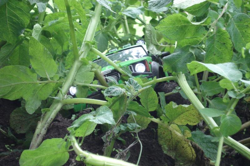 sortie patates ( boueuse )  Dsc06234