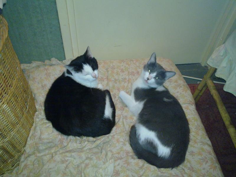 My cat :) 20100810